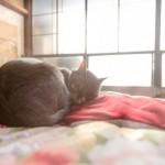 肩こりが解消で枕の高さを見直し バスタオルを枕代わりにした結果は!