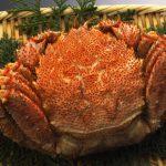 北海道でカニといえば毛ガニ ぜひこの美味しさを味わって欲しい!