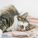 いびきは枕で治す! いびきをかくと疲れが全然取れていないんです。横向きの枕をつかって翌朝スッキリ